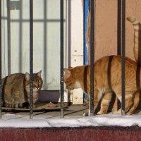 Вместе легче пережить холод... :: Татьяна Смоляниченко