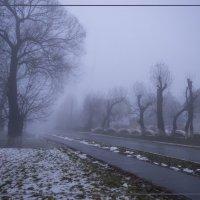 В тумане :: Дубовцев Евгений