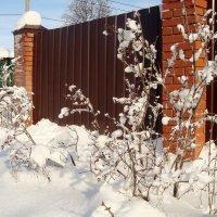 снежку подвалило... :: Галина Флора