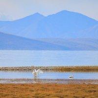 Пейзаж с лебедями :: Владимир Собардахов