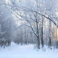 Солнце в зимнем лесу :: Сергей Тагиров