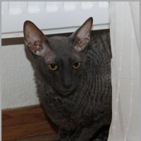 Кресло-батарейный кот Стинг :: Сергей Андриянов