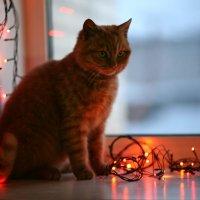 кот рождественский :: майя *