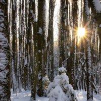 Зима пришла :: Юрий Кольцов