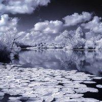 На озере.... :: Александр Криулин