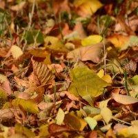 На ковре из Жёлтых листьев танцует Осень.......... :: Paparazzi