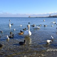 Птицы в Феодосии :: Виктор Шандыбин