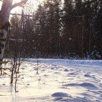 Снег кружится, летает, летает :: Татьяна Ломтева
