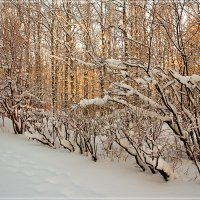 Зимняя сказка :: Виктор Бондаренко