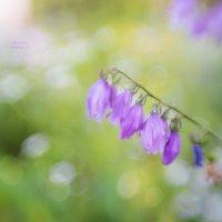 Summer... :: Оксана Анисимова