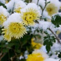 Первый снег :: Александр Крупский