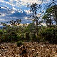 Природа Израиля :: сергей cередовой