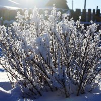 Зимнее цветение :: Николай Масляев
