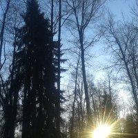 Солнечный пейзаж :: Сапсан
