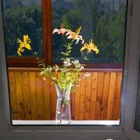 Лилии на окне :: Дубовцев Евгений