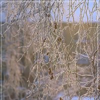 Зимние узоры :: Виктор Бондаренко