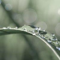 После дождя :: Андрей Степанов