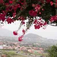 Небо из цветов :: Bogdan Snegureac