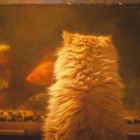 Хочу рыбку:) :: Ira Oleynik