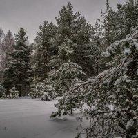 Зимний лес 2 :: Андрей Дворников