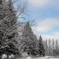 День Зимы :: Miro Forja