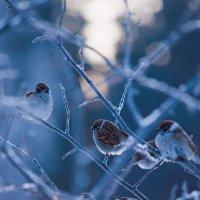 Утро морозное :: Владимир Новиков