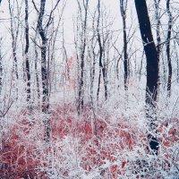 Осень :: Jack Wall