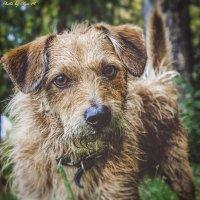 История одной собаки :: Ольга Мансурова