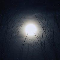 Зловещая луна :: Dmitriy Predybailo