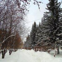 Аллея для прогулок. :: Мила Бовкун
