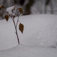 Одиночество :: Андрей Дворников