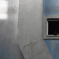 Я вижу цветы на окне :: Инна Мамонова