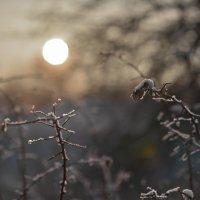 Winter Garden :: Женя Лузгин