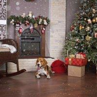 Рождественское настроение :: Тата Казакова