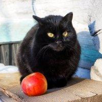 Охрана для яблок! :: Ирина Антоновна