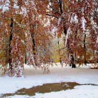 Зимняя осень :: Александр Михайлов