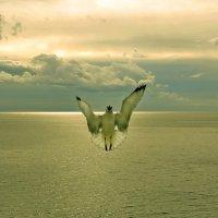 """Молитва (из серии """"Никогда не учите птиц летать..."""") :: Александр Бойко"""