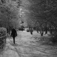 Зимний вечер. :: Ольга Лиманская