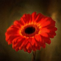 Пламенный привет лета.... :: Tatiana Markova