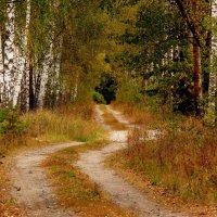 дорога в еще зеленых березах :: Александр Прокудин