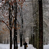 Морозно в парке на метеогорке. :: Пётр Сесекин