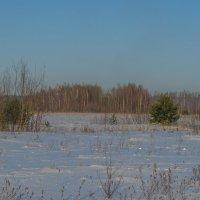 Зимнее поле :: Сергей Цветков