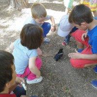 Малыши нашли птичку. :: Оля Богданович