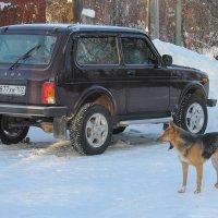 Водитель Нивы устал от дальней дороги и хочет спать ))) :: Сергей Тагиров
