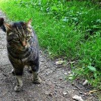 Кот удивлённый :: Nina Yudicheva