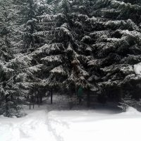 Ельник. :: Мила Бовкун