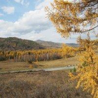 Осень в Хакасии. :: MaOla ***
