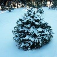 """Мороз снежком окутывал: """"Смотри, не замерзай!"""" :: Надежда"""