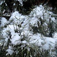снежные иголки :: Елена Семигина