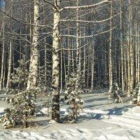 На часок декабрь приветил солнце... :: Лесо-Вед (Баранов)